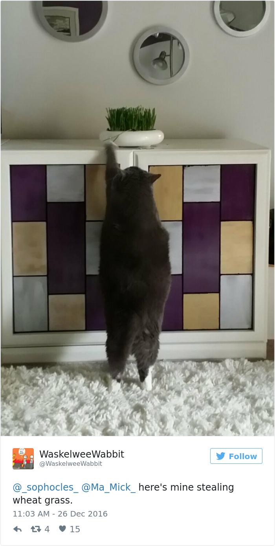 cat-caught-stealing-cinnamon-bun-percy-10