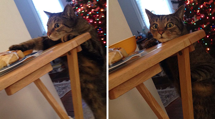 Cat Gets Caught Trying To Steal A Cinnamon Bun, And His Expression Says It All
