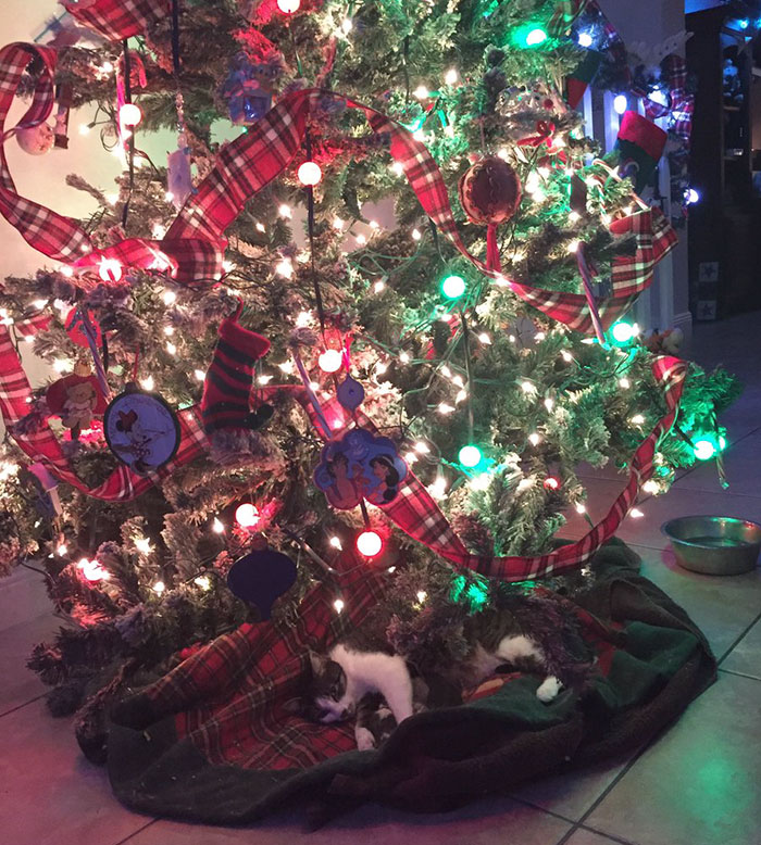 cat gives birth under christmas tree 2