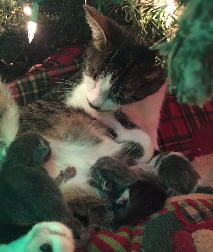 cat gives birth under christmas tree 3 - Christmas Names For Cats