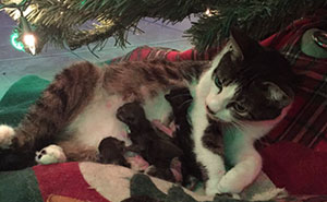 Cat Gives Birth Under Christmas Tree, And It's The Best Present Ever