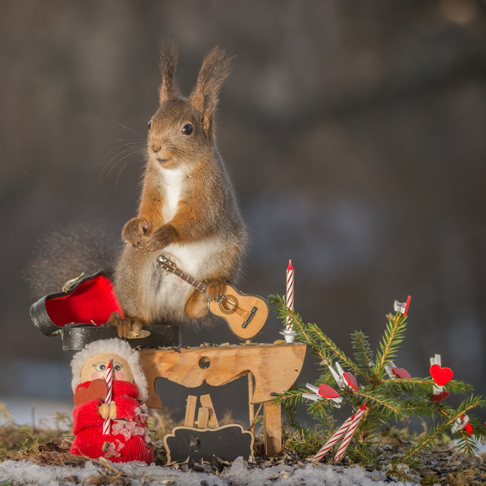 Squirrels In A Christmas Mood