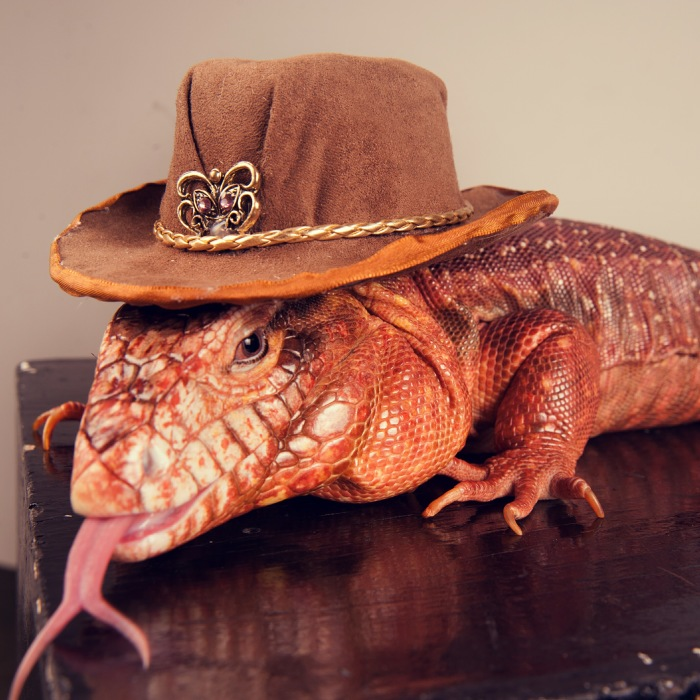 I Spent 2 Weeks Photographing Animals With Human Acessories