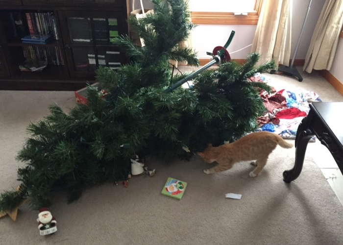 When My New Kitten Realized Christmas Had A Tree