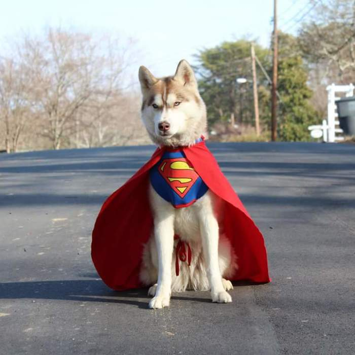 Banner, The Super Hero Service Dog Uses Cosplay To Educate Children About Service Dogs