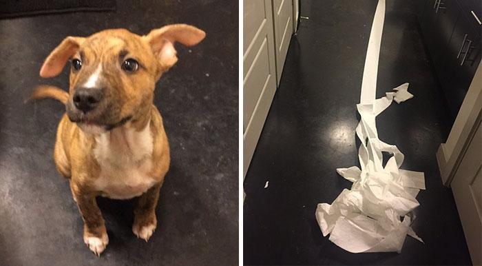 Este perro se hizo pis en el baño de un amigo de su dueño e intentó limpiarlo él mismo