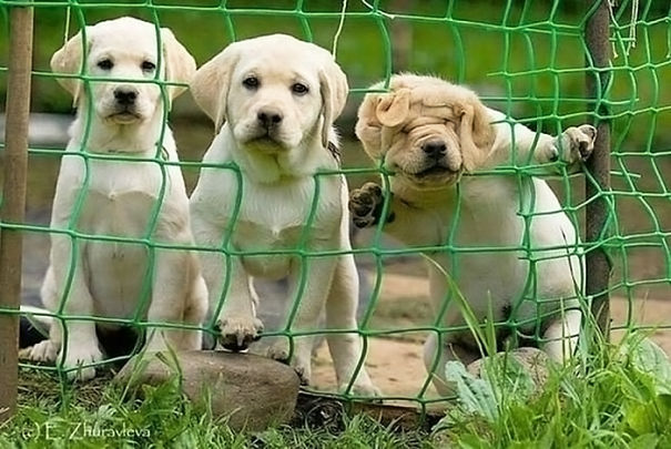 The Three Degrees Of Curiosity