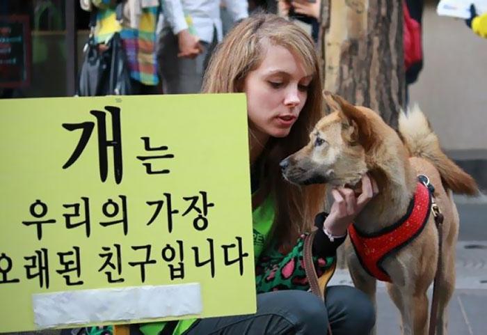 dog-meat-market-shut-down-south-korea-2