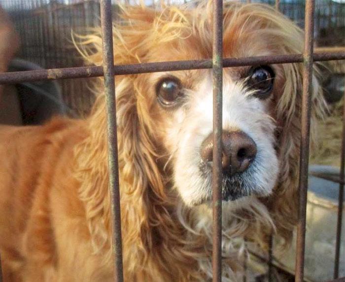dog-meat-market-shut-down-south-korea-3