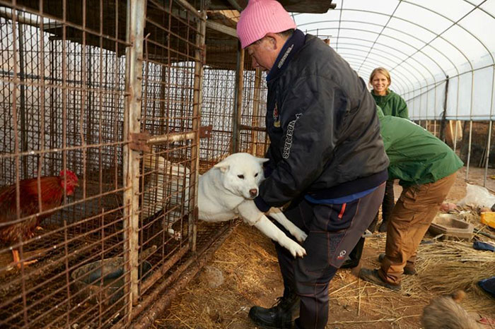 dog-meat-market-shuts-down-south-korea-01