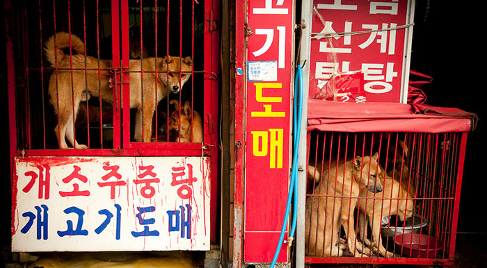 BREAKING: Dog Meat Market Responsible For 33% Supply In South Korea Is Being Shut Down