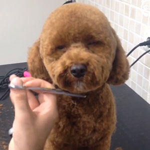 This Pet Stylist Has The Best Job Ever