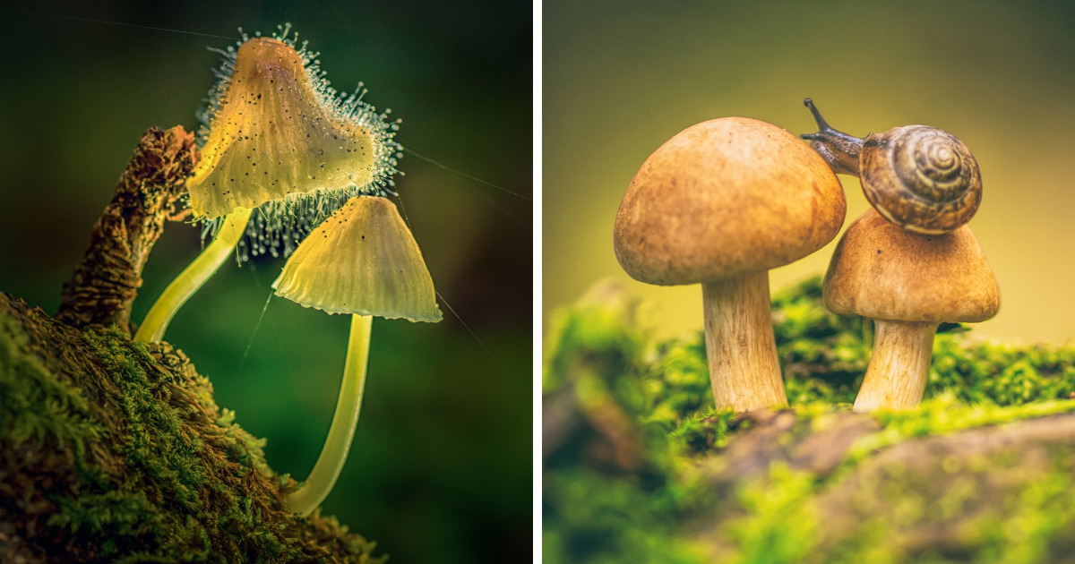 I Photograph Mushrooms And Try To Present Them In The Most Beautiful Way Possible