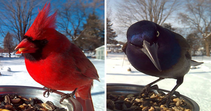 Huelga una actitud: 12 fotos de pájaros que son pájaros | Audubon