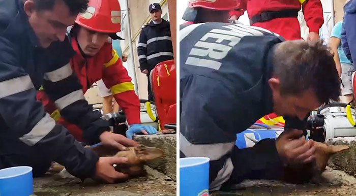 Romanian Firefighter Fights For Dog's Life By Performing CPR