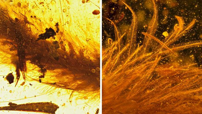 Encuentran preservada en ámbar una cola de dinosaurio de hace 99 millones de años y está cubierta de plumas