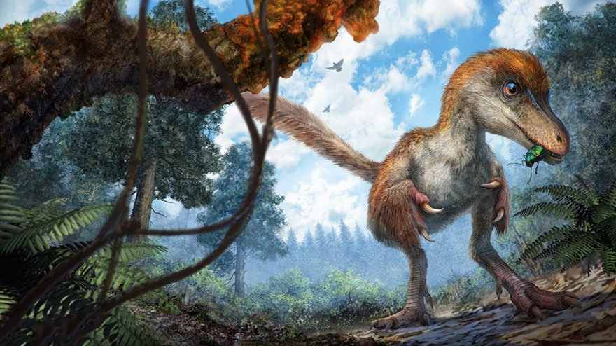 first-fluffy-dinosaur-tail-amber-lida-xing-10