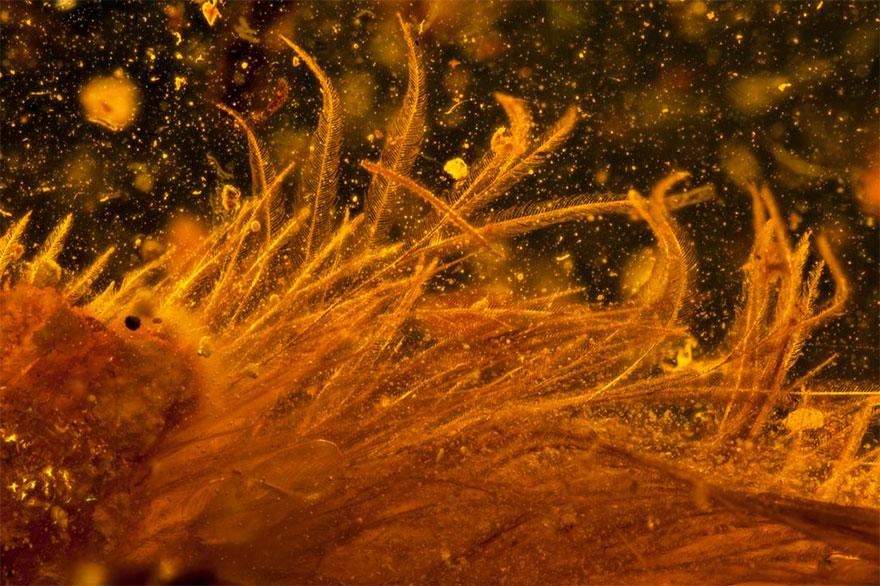 first-fluffy-dinosaur-tail-amber-lida-xing-3