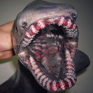 Russian Fisherman Posts Terrifying Creatures Of The Deep Sea On Twitter, And People Want Him To Stop