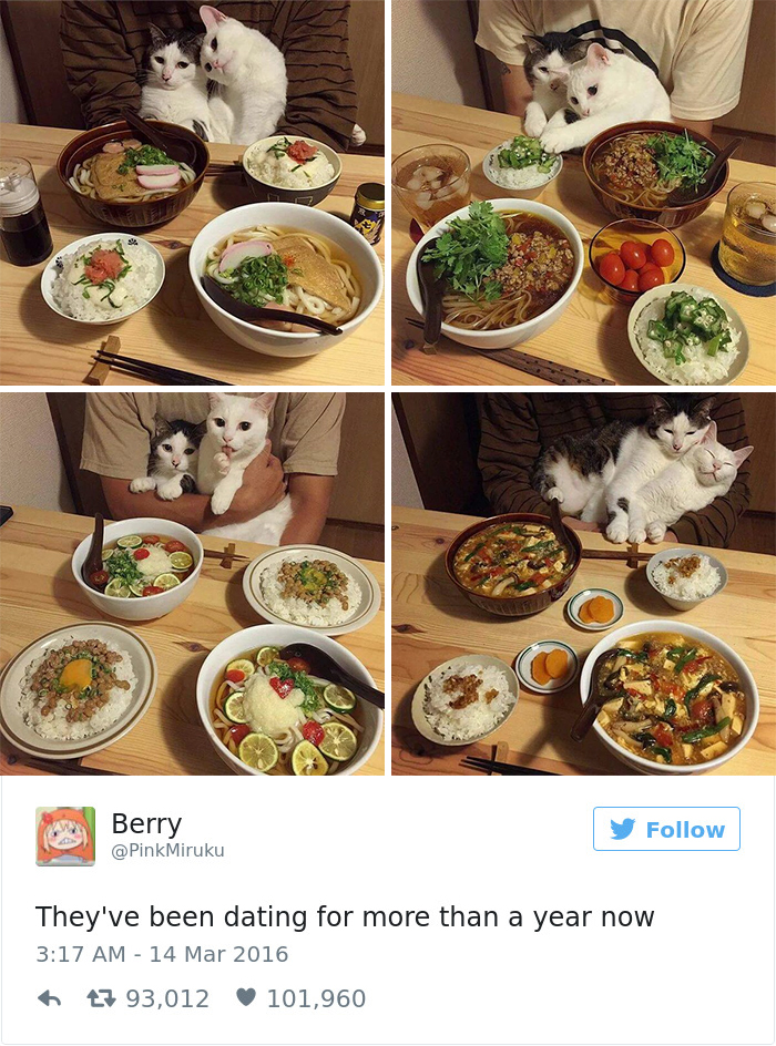Best Cat Tweets Of 2016