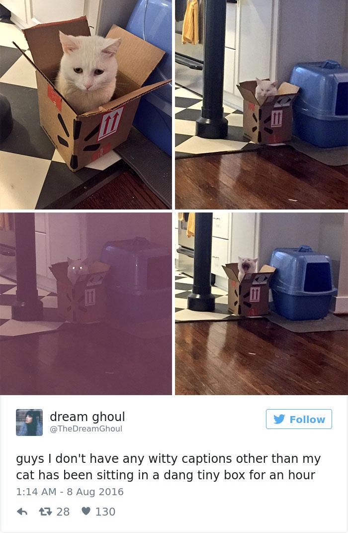 Best Cat Tweets Of 2016