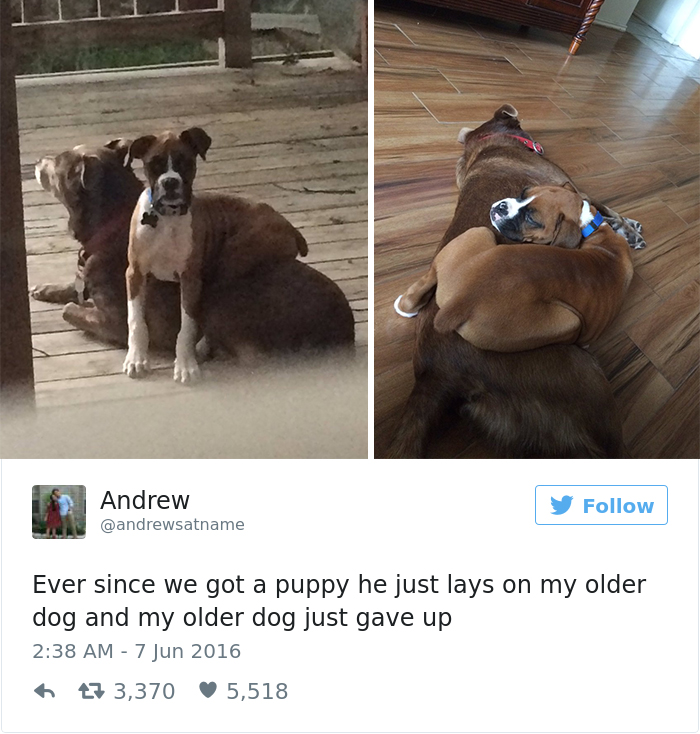 10 Of The Best Dog Tweets Of 2016 Bored Panda