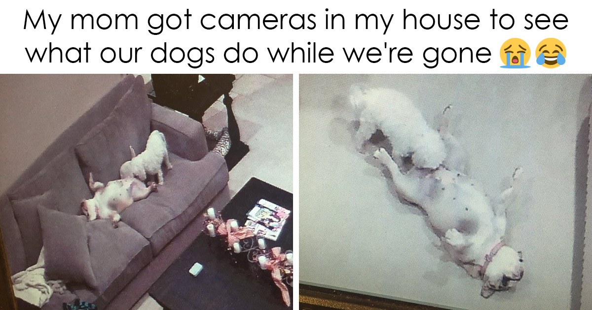 10+ Of The Best Dog Tweets Of 2016