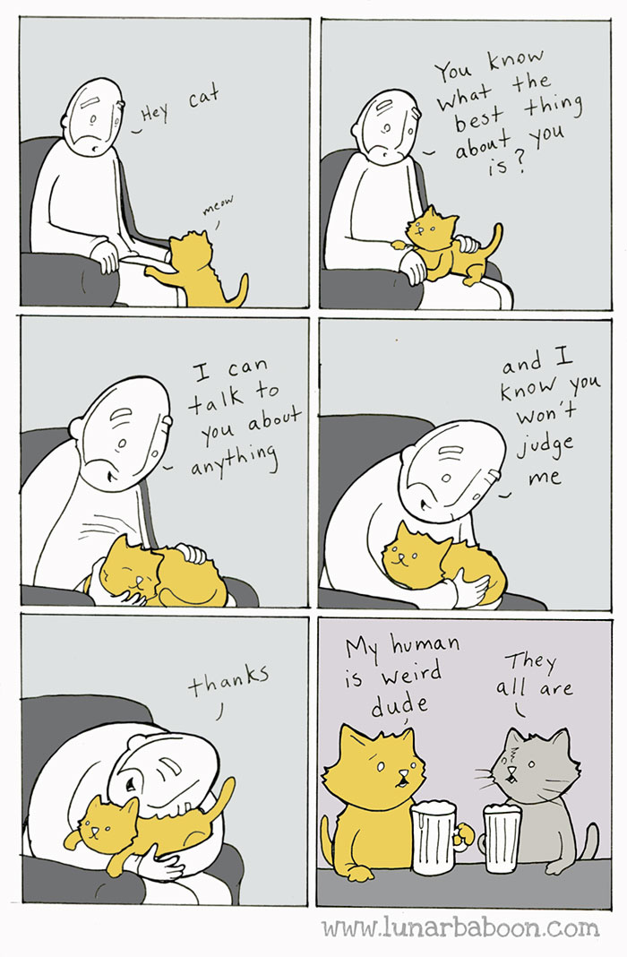 Image result for cats are weird jeffrey brown