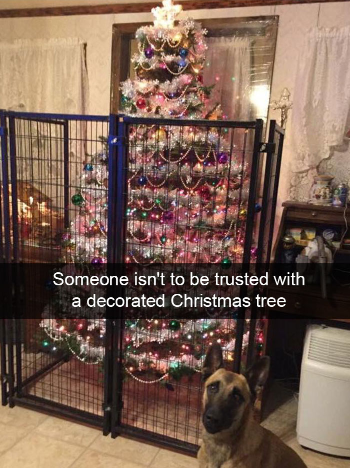 10 Hilarious Christmas Posts That Are Impossible Not To