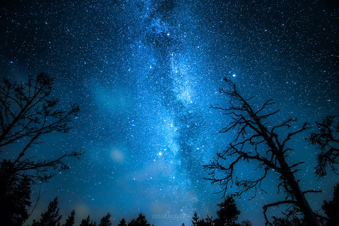 Galactic Forest