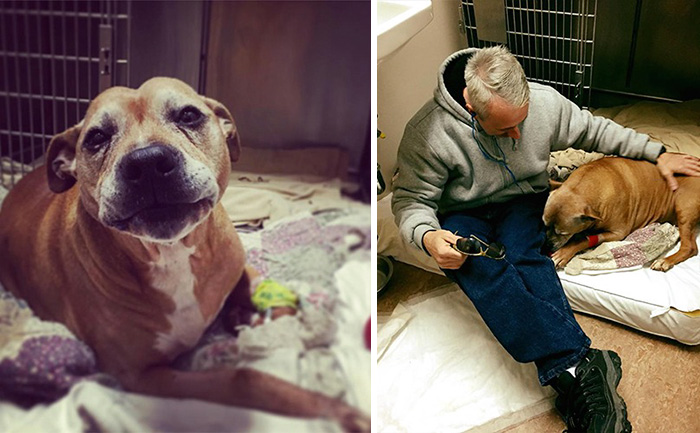 Homeless Man Can't Afford His Senior Dog's Life-Saving Treatment, So This Stranger Covers It In Full