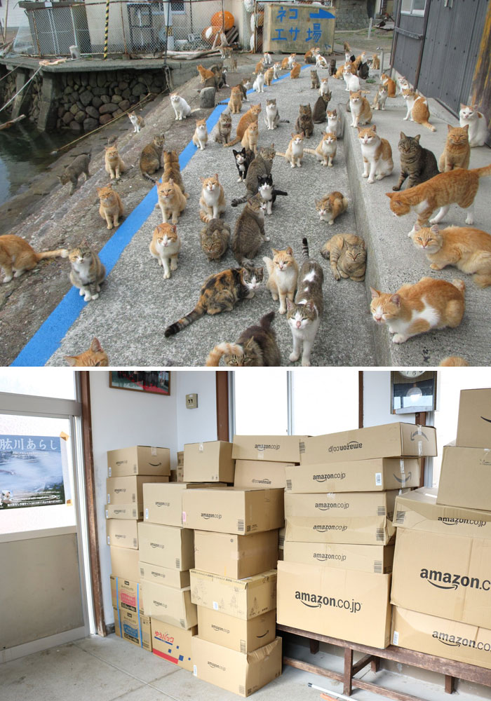 Japan's Cat Island Asks Internet For Food And A Few Days Later, The Island Was Overwhelmed With Donations
