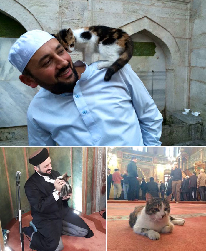 Imam Opens Mosque's Doors To Stray Cats To Keep Them Warm