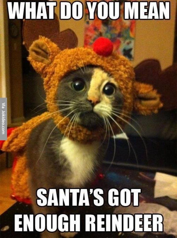 Some Cat Memes I Found… I Hope They Make You Giggle A Little, Or At Least Make You Smile -Enjoy =^•^=
