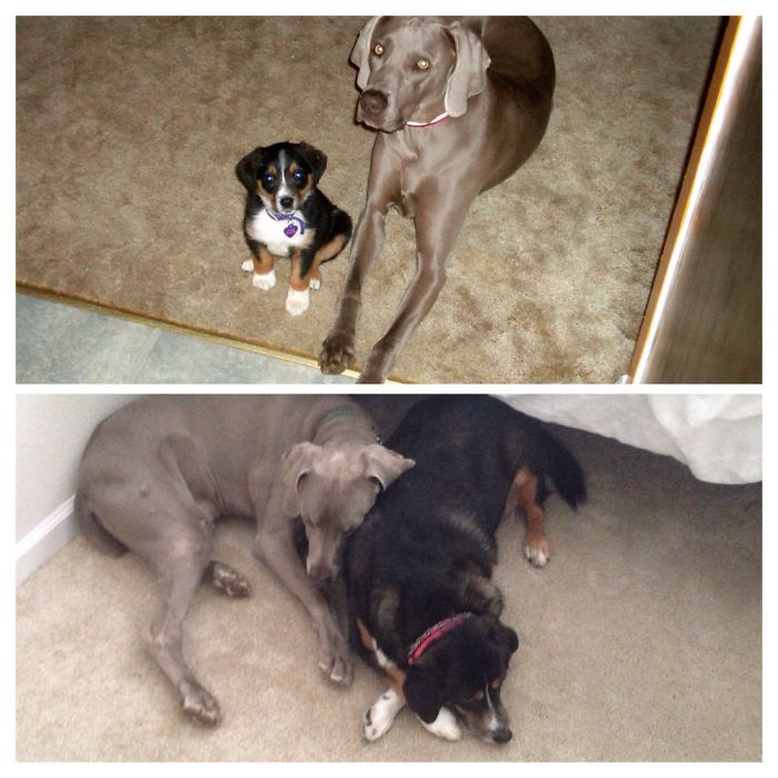 They Have Been Best Friends Forever! They Cannot Apart...