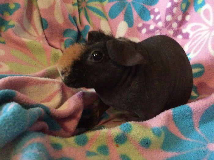 Meet Hippo