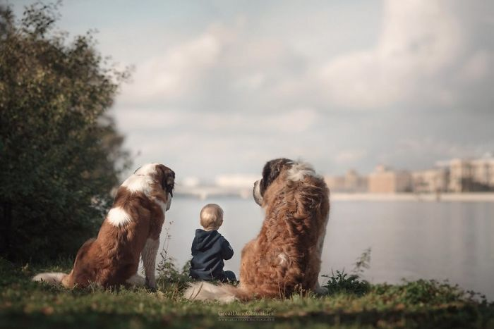 Little Kid Big Dog This Giant Furry Dog Playing With A Kid Will Make Your Day | {focus_keyword}