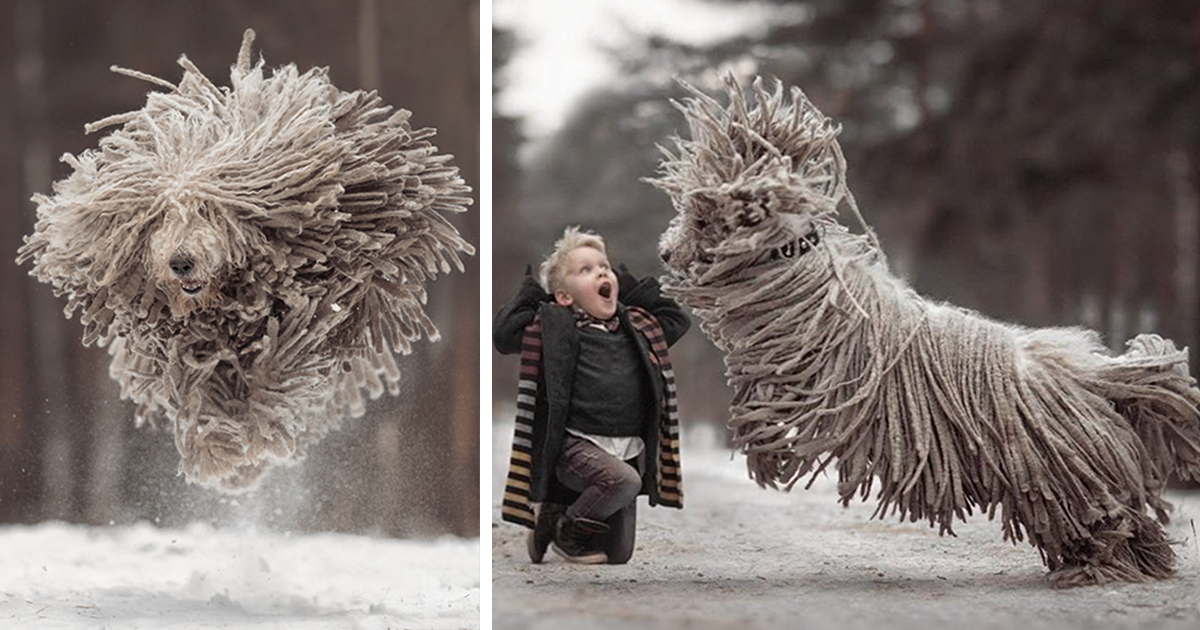 This Giant Furry Dog Playing With A Kid Will Make Your Day