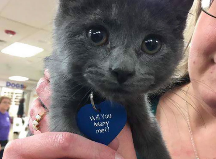 man-proposes-girlfriend-tiny-rescue-cat-8