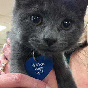 This Man Proposed To His Girlfriend With A Rescue Kitty, And It Can't Get Any Cuter