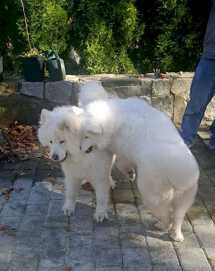 meat-farm-dogs-reunite-kenji-sophia-3