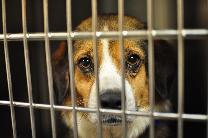 the puppy mill commercial for the dog stores Jack, purchased at auction by national mill dog rescue  through online  fundraising efforts in order to purchase dogs from commercial breeders at auction   in pet stores has on undermining the effectiveness of such laws, and, of  course,.