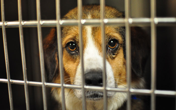New Jersey Passes New Law That Requires Pet Stores To Sell Only Rescue Animals