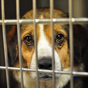 New Law Requires Pet Stores To Sell Only Rescue Animals In New Jersey