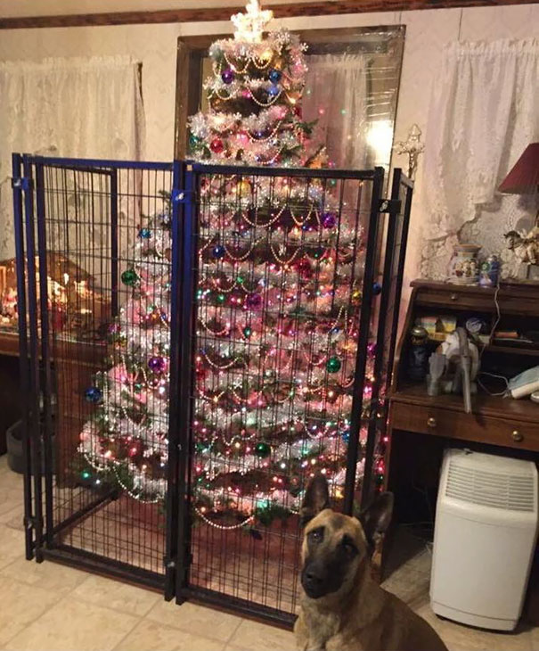 Someone Isn't To Be Trusted With A Decorated Christmas Tree