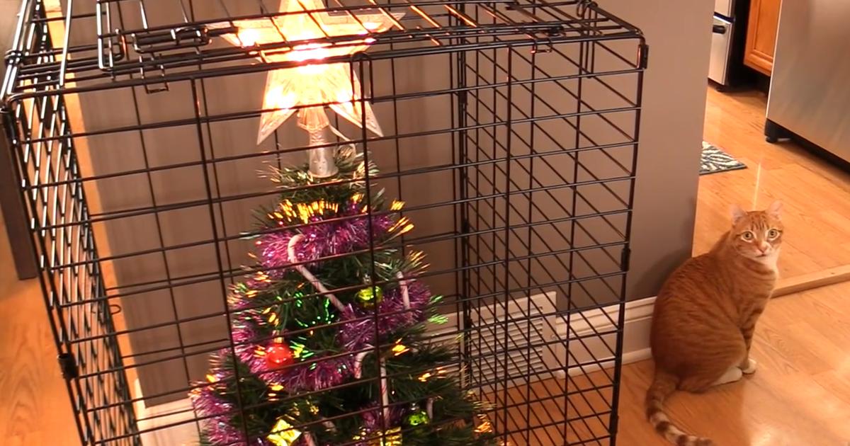 5f302600f4b 15 Personas ingeniosas que descubrieron cómo proteger su árbol de Navidad  de mascotas malvadas