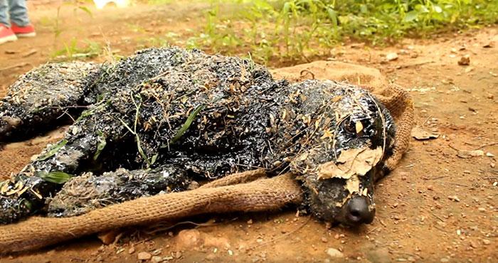 filhote de cachorro-quedas-hot-tar-india-2