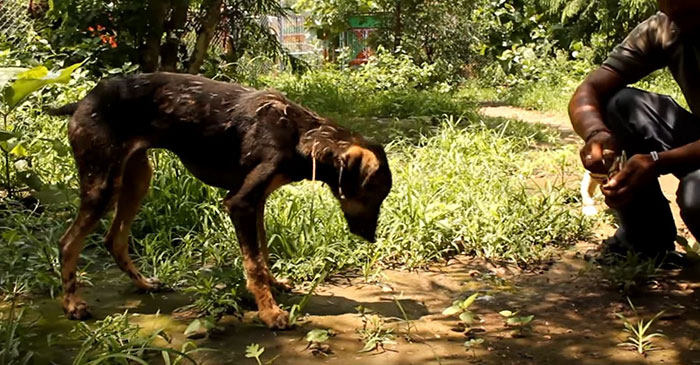 puppy-falls-hot-tar-india-5