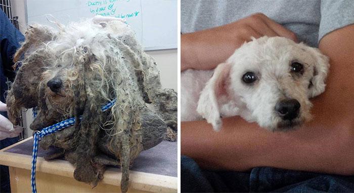 Increíbles antes y después de 15 perros rescatados.