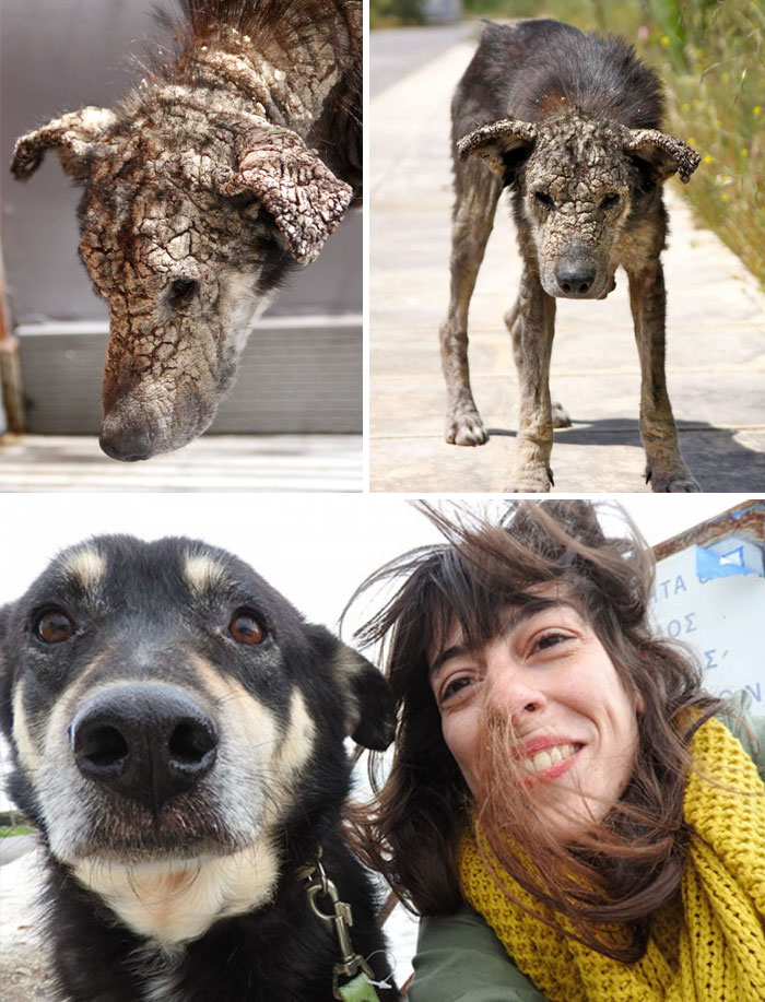 Dog Who Turned To Stone From Mange Was Afraid Of Human Touch, Now Demands Belly Rubs